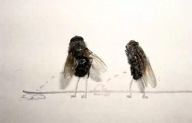 """The art of """"Flychelangelo"""" 6"""