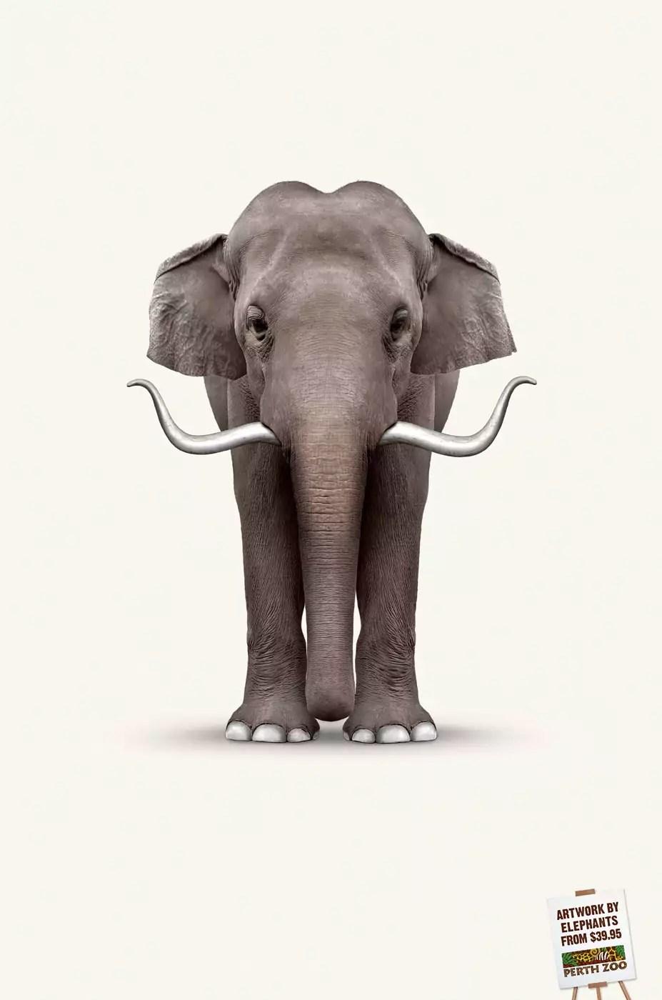 Perth Zoo — Elephant Art: Dali