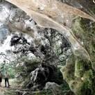 Monster spider web spun in Texas
