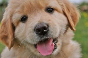 Puppiest.com
