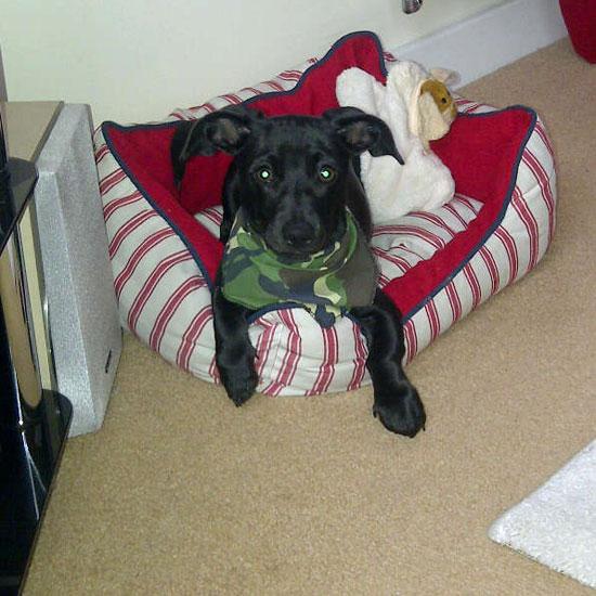 Camo Recruits Puppy Bandana