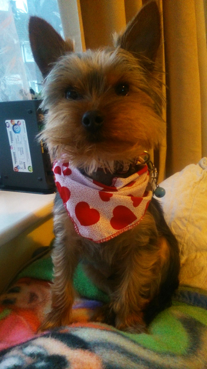 Special Occasions Puppy Bandana