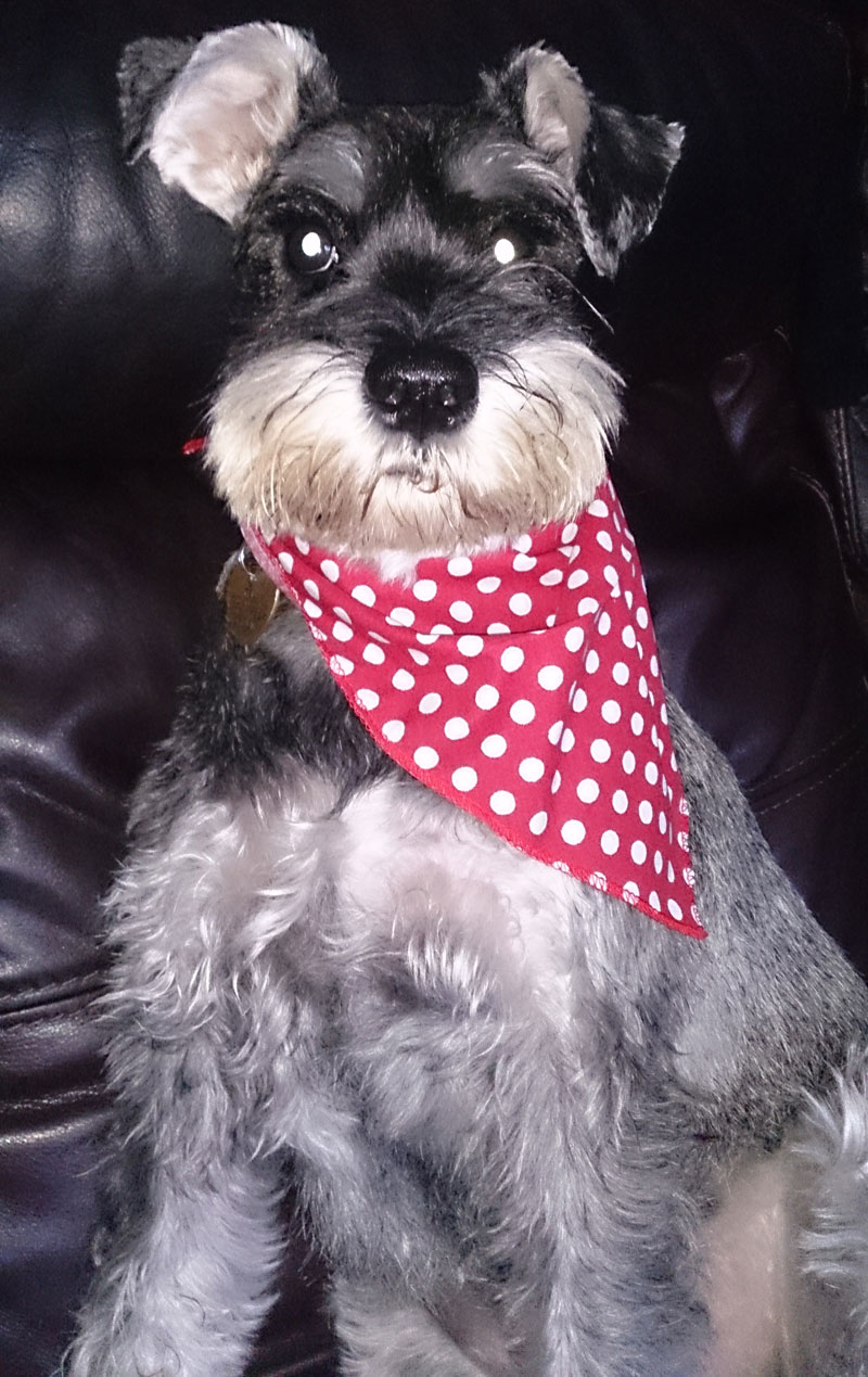 Red Spotty Dog Bandanas Polka Dot Dog Bandanas For Sale