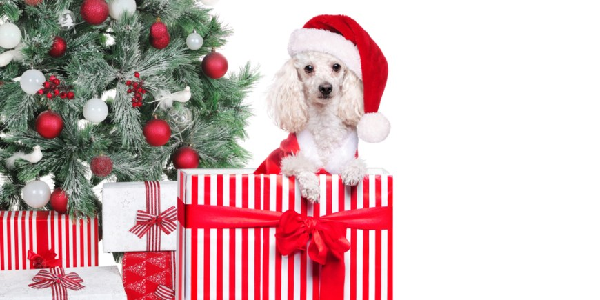Dog Proofing For The Holidays