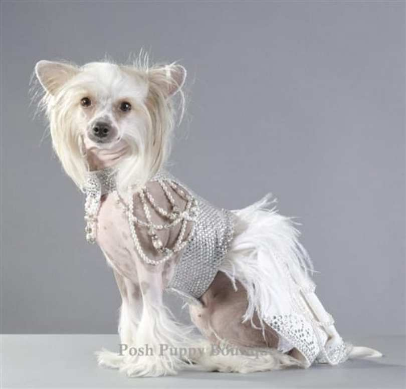 couture futuristic royal harness dress - Você daria este colar para seu Pet?