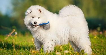 DogGrooming FI
