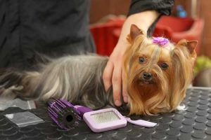 Become a Pet Groomer