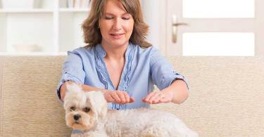 1527119406 97 reiki for dogs