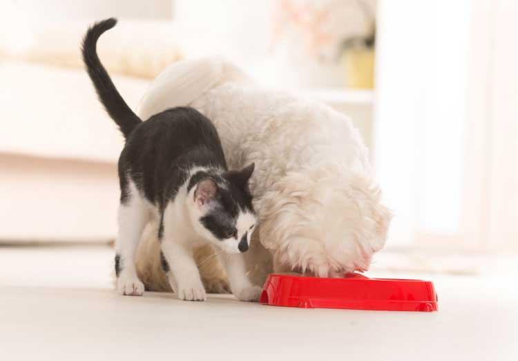 Dog Eating Cat Food