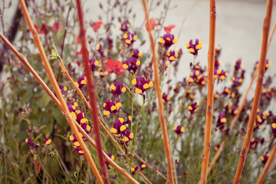 Flowers at the Getty Center, Los Angeles.