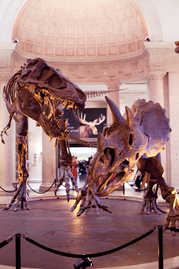 Tyrannosaurus Rex and Triceratops fossils on display in the lobby of the Natural History Museum in Los Angeles.