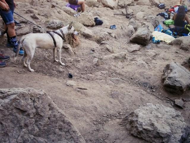 Dog at Malibu Creek.