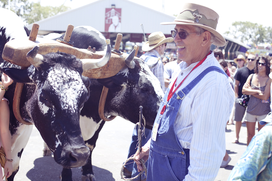 Farmer showing off his two cows at the Orange County Fair.