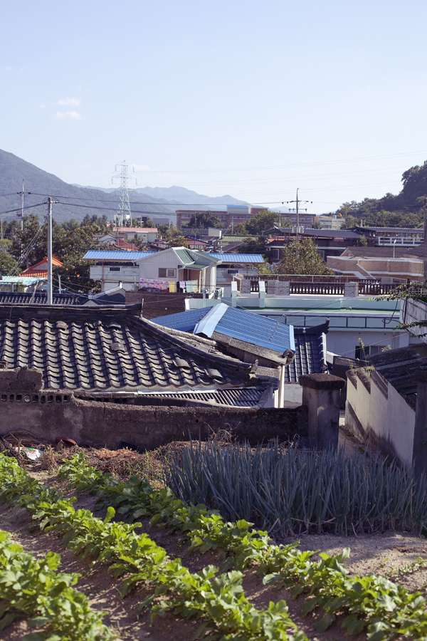 View from garden behind historical building in Sangju, South Korea.