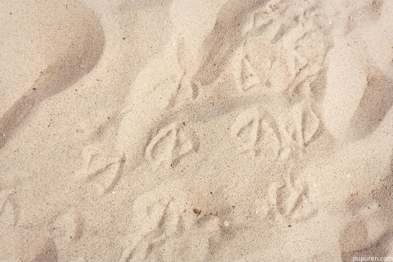 Seagull footprints at Venice beach, Los Angeles.