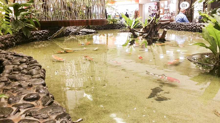 Koi pond at Terminal 2 of Changi Airport, Singapore.