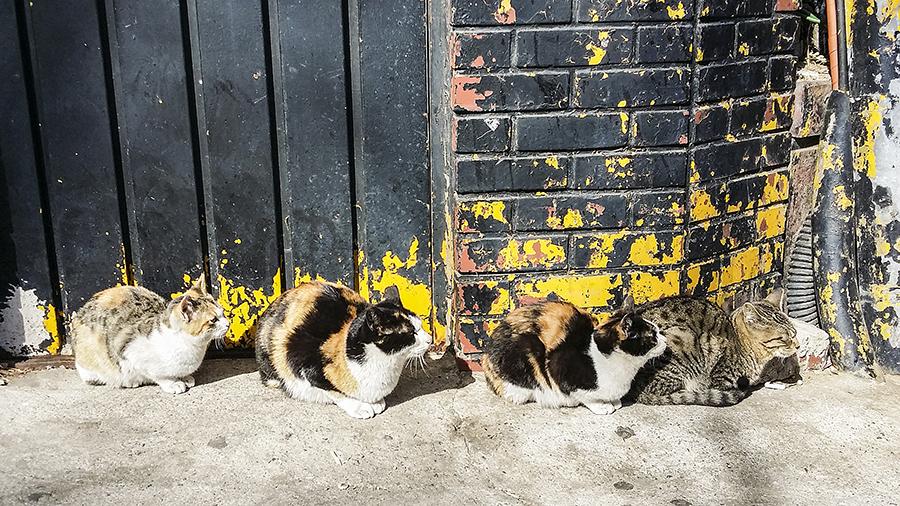 Four street cats on a roadside in Seoul, South Korea.