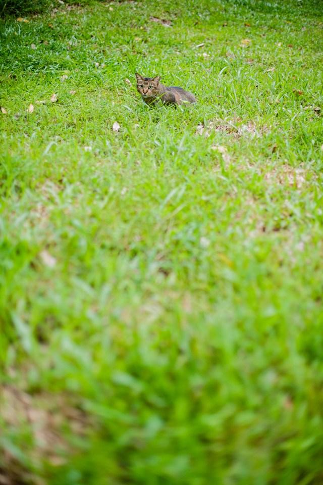 Cat among the grass.