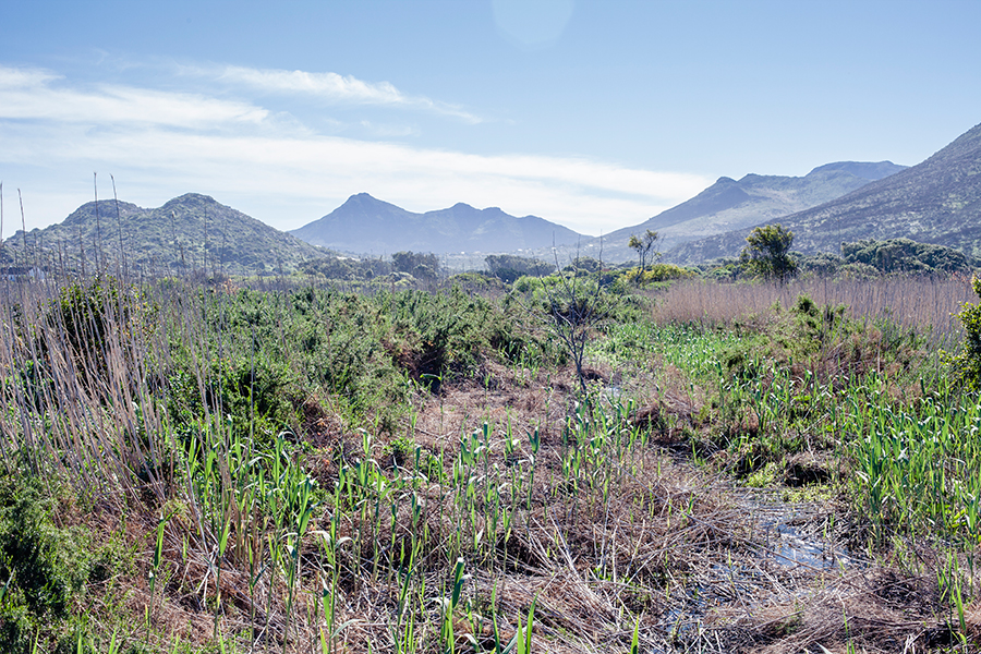 Landscape of mountains in the background at Silvermine Wetland Conservation Area, Fish Hoek, Cape Town, South Africa.
