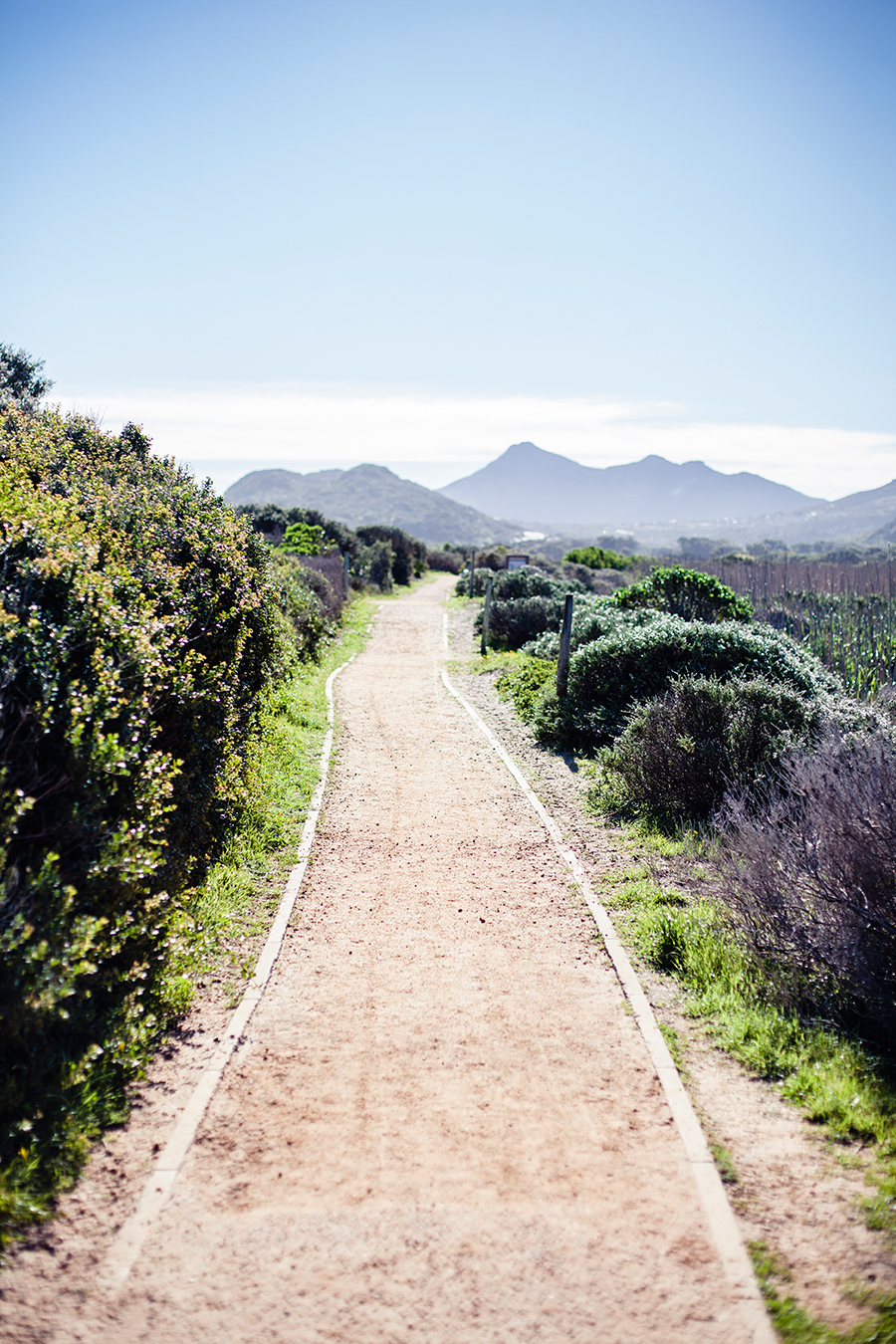 Trail at the Silvermine Wetland Conservation Area, Fish Hoek, Cape Town, South Africa.