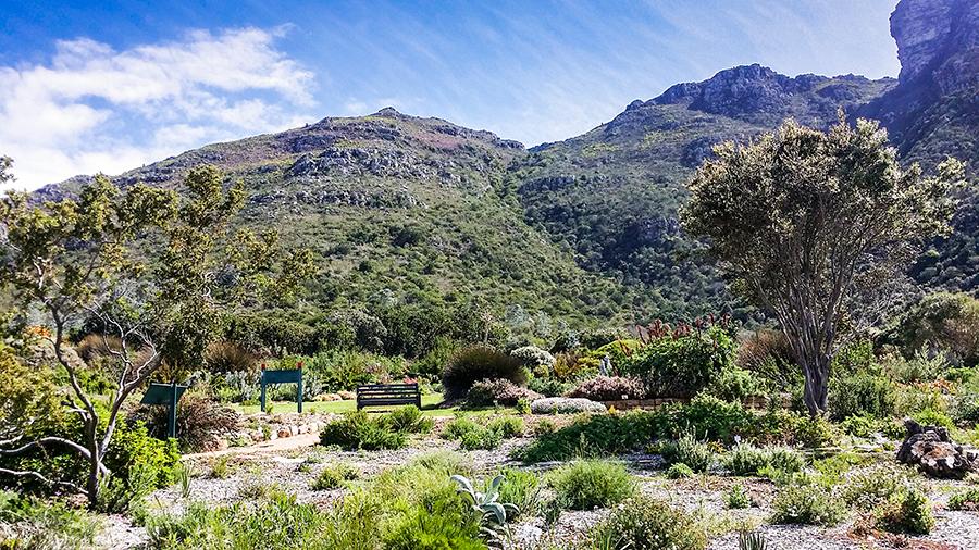 Mountain at Kirstenbosch, South Africa.