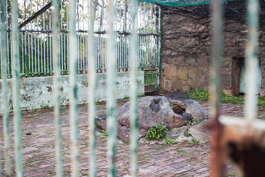 Abandoned animal cage at Groote Schuur Estate, Table Mountain National Park, Cape Town, South Africa.