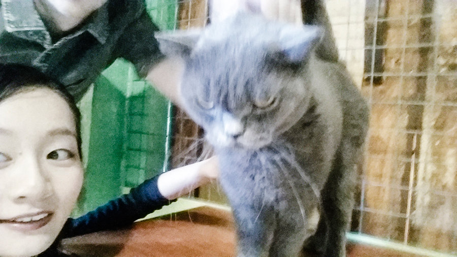 Attemping to pet grey ball of fur at Cats' Safari Singapore pet therapy.