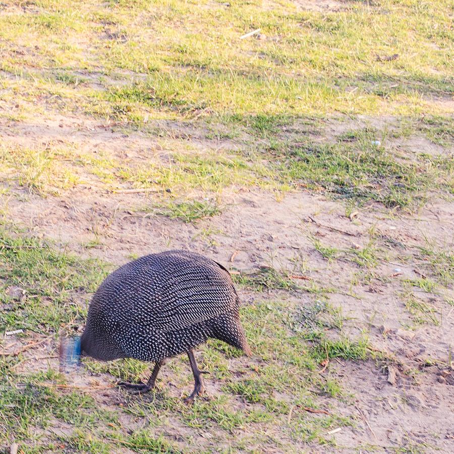 Bird at Signal Hill, Cape Town.