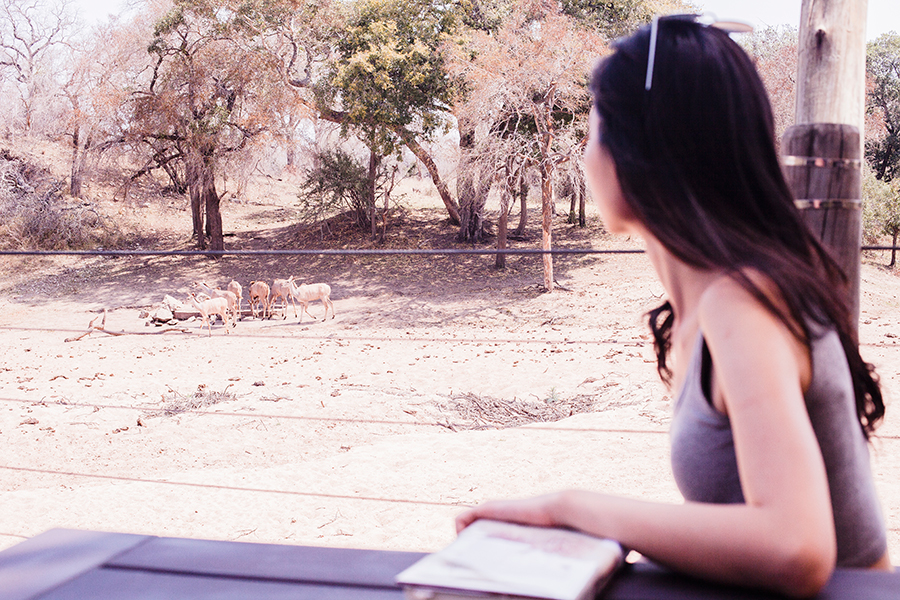 Chilling, reading a book, and watching wild animals approach the watering hole across the balcony at Rhino Post Safari Lodge, Kruger National Park, South Africa.