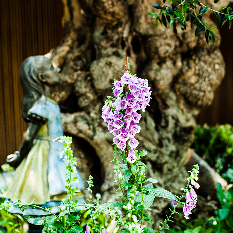 Statue and flowers at an olive tree at the Flower Dome at Gardens by the Bay, Singapore.