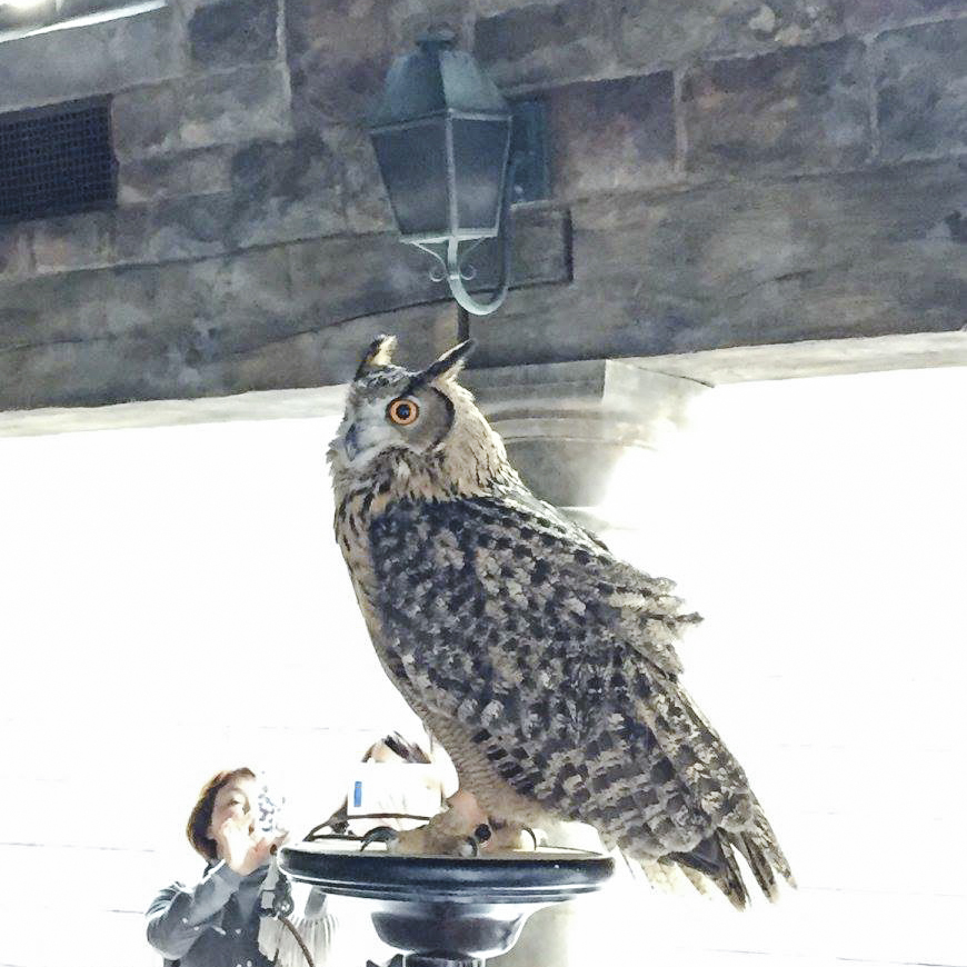 Owl at The Wizarding World of Harry Potter at Universal Studios Japan, Osaka. Photo by Ruru.