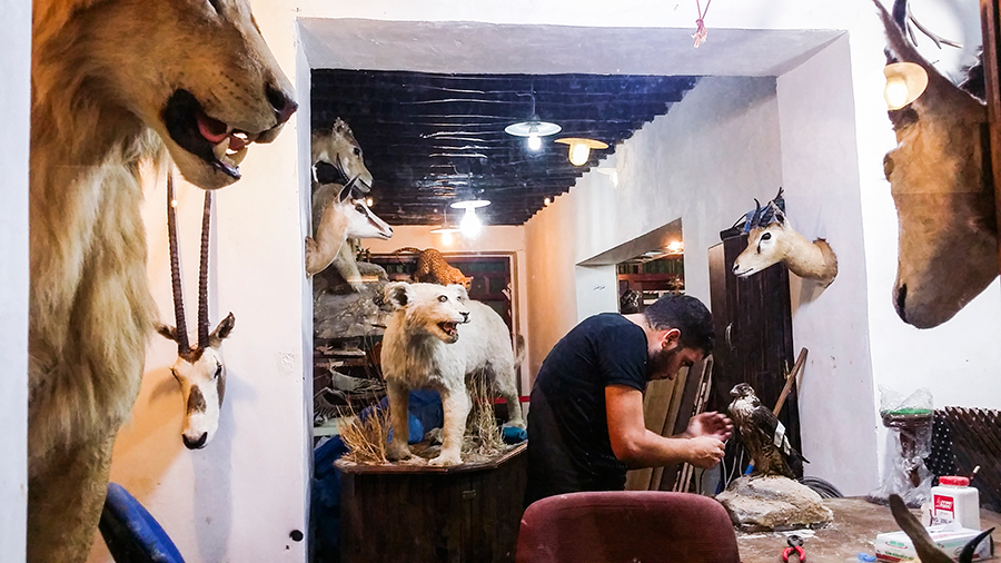 Taxidermist at work at Souq Waqif (سوق واقف), Doha, Qatar.