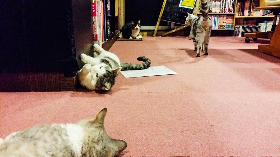 Kitties lounging at Nyan Tsume, Osaka, Japan.