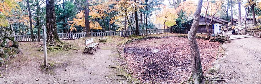 Nara Park, Japan.