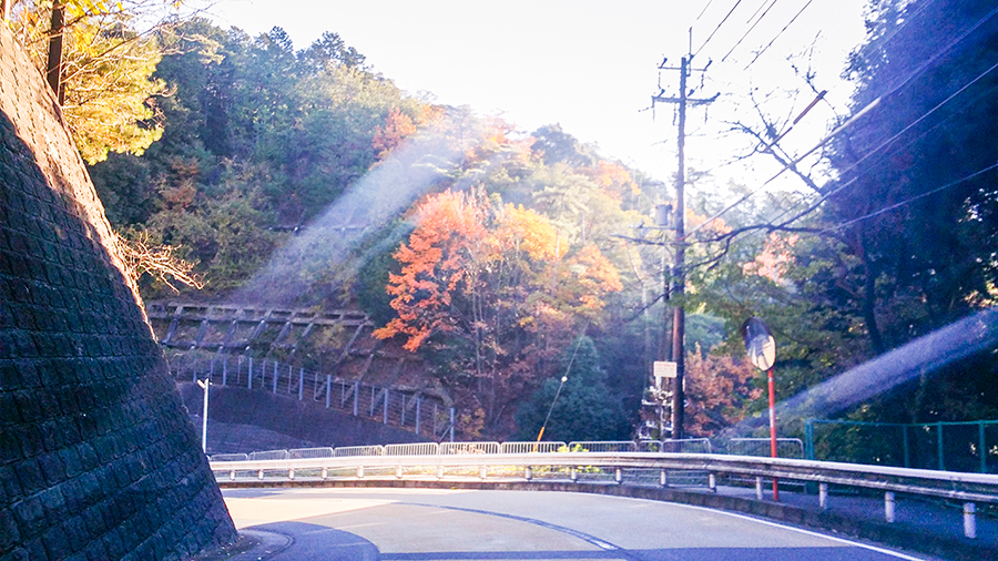Autumn leaves on the road down from our Kyoto Airbnb.