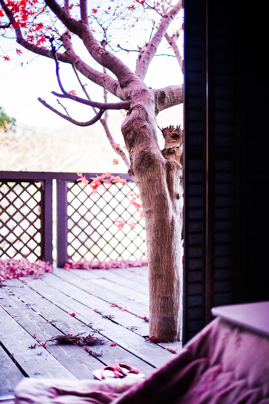 Momiji maple tree and kotatsu at our Kyoto Airbnb.
