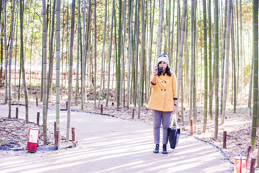 Shasha among bamboo at Arashiyama, Kyoto, Japan.