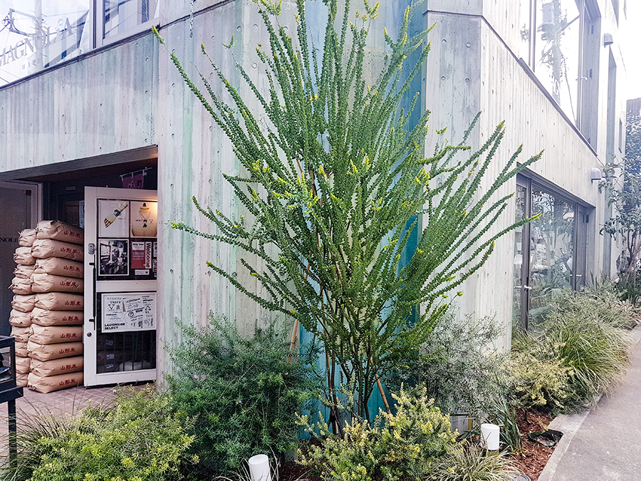 Interesting building and plants in Tokyo.