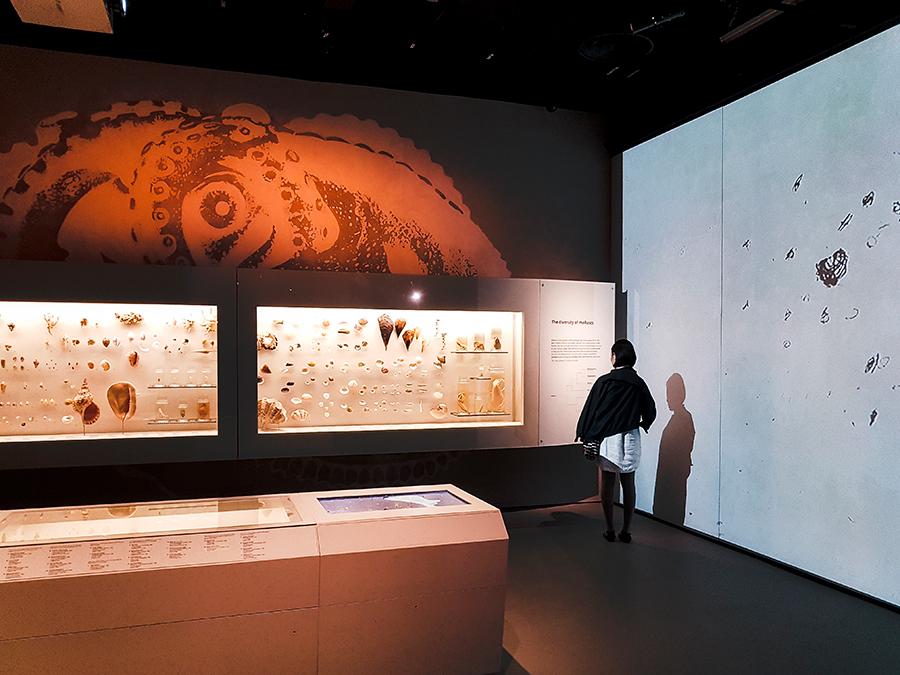 Shells at Lee Kong Chian Natural History Museum.