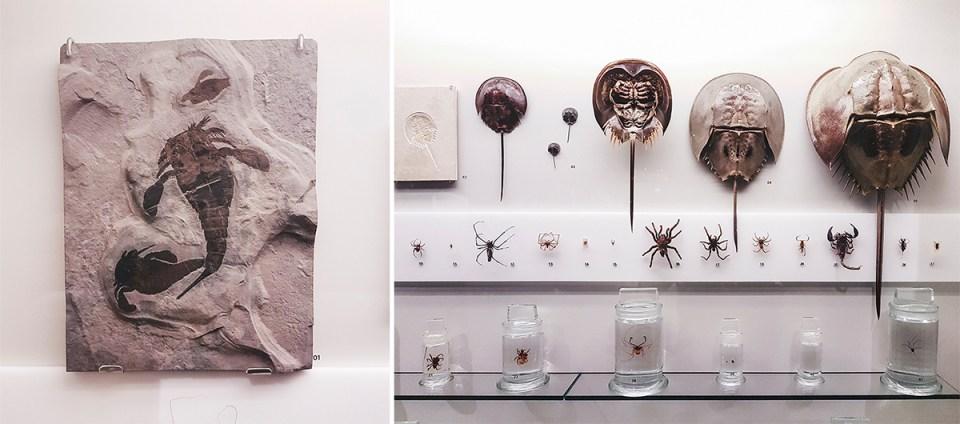 Sea Scorpions and Horseshoe Crabs at Lee Kong Chian Natural History Museum.