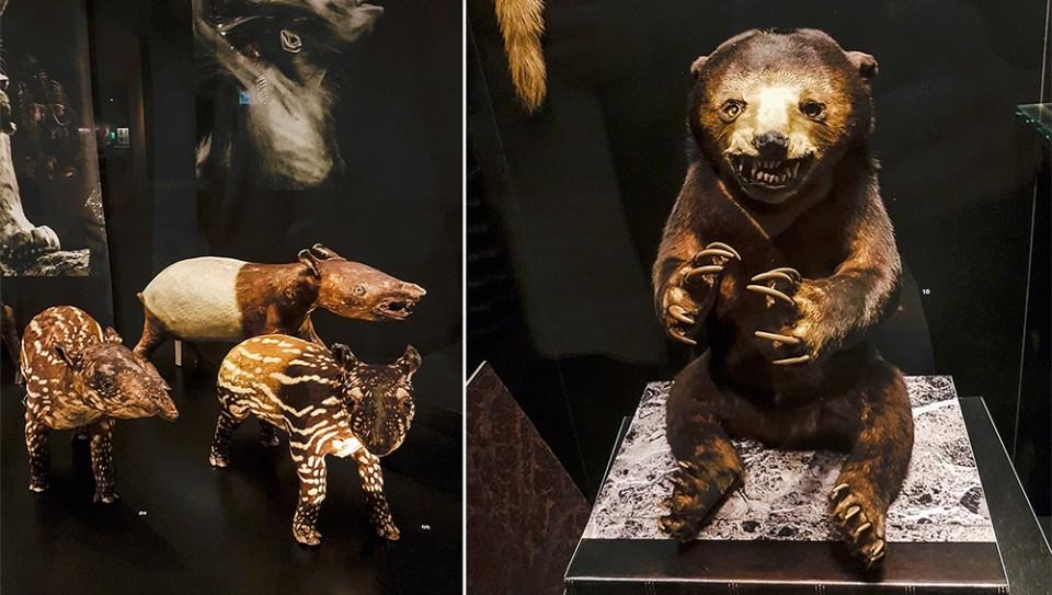 Interesting taxidermy mammals Lee Kong Chian Natural History Museum.