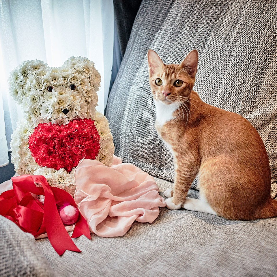 Kitty Teh and Mr. Crush Teddy Bear Bouquet from Little Flower Hut