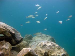 Blue Heron Bridge Rock Pile