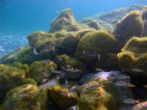 Blue Heron Bridge Rock Pile with New Growth