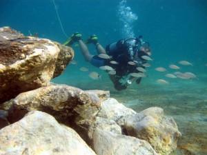 Blue Heron Bridge Dive