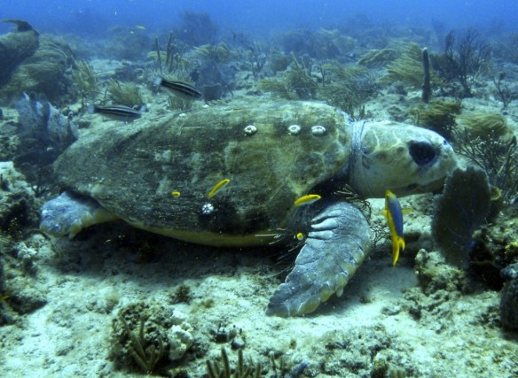 Symbiosis in the Sea