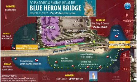 Blue Heron Bridge Night Dive: April 6th