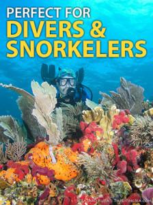 diver-snorkeler