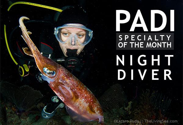 padi-night-diver-lg