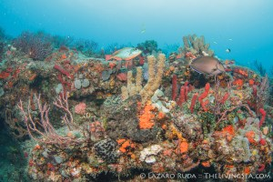 South Florid Reef Dive